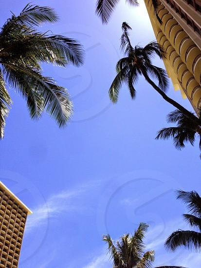 Hawaii Summer photo