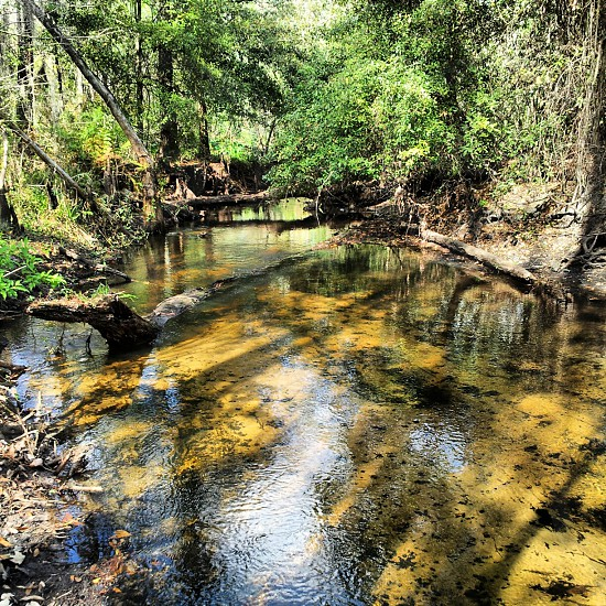 creek everglades econolockhatchee river photo