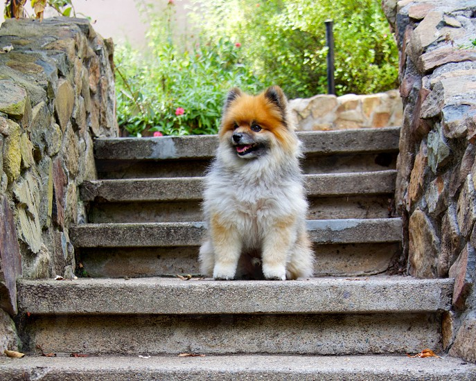Exploring steps with Captain Henry Gingersnaps. photo