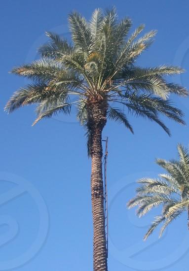 Palm tree desert  photo