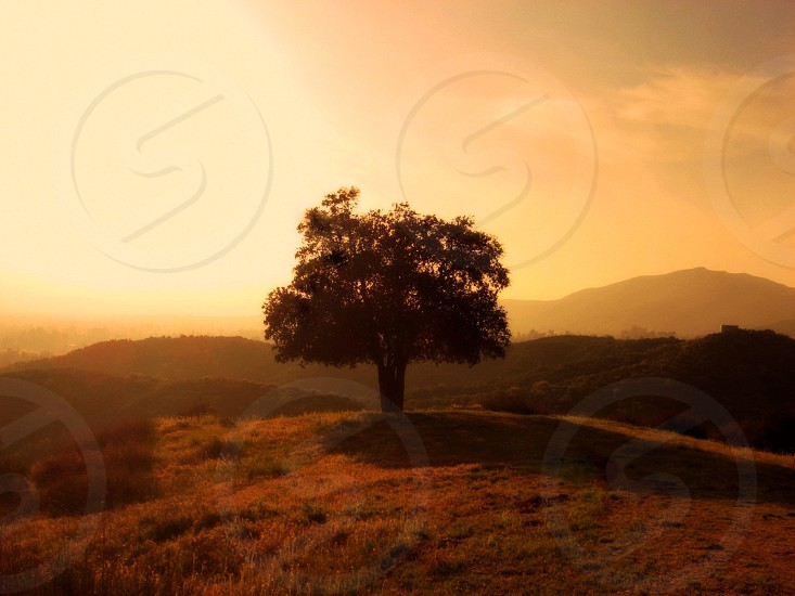 An early photo of a lone tree in the Southern California foothills photo