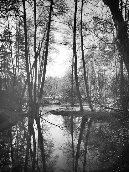 A black and white photo of a lake and trees in Poland. photo