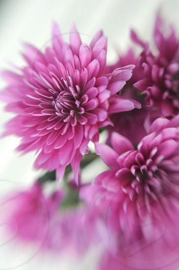 Purple flowers.  photo