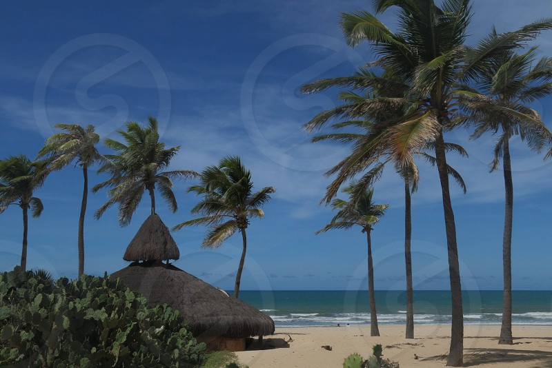 hut on beach with palm trees photo