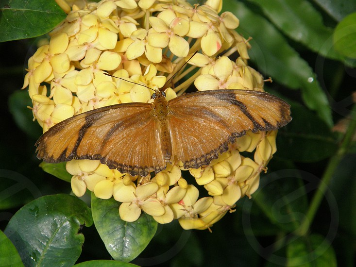 yellow flowers with brown butterfly black stripe on wings photo