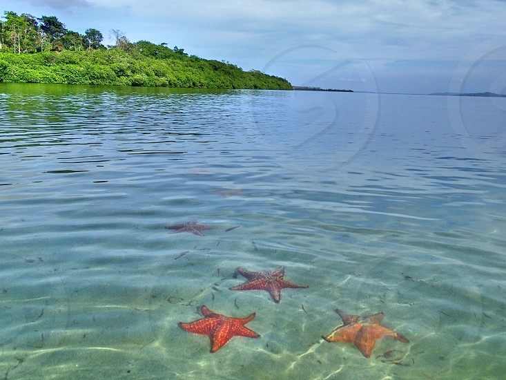 Starfish Beach Panama  photo