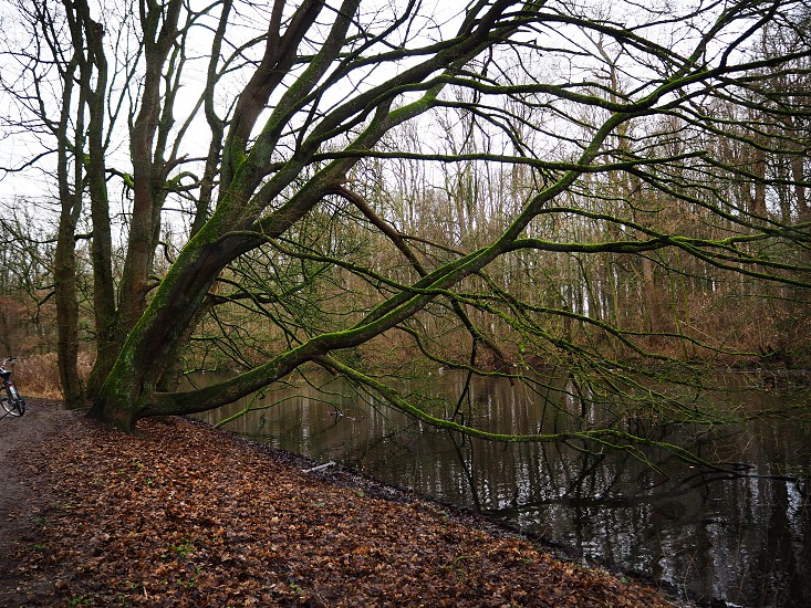 Photo of Amsterdam Bos (forest) in a cloudy day photo