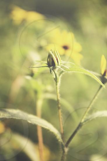 foliage flower flower bud sunlight sunshine sun yellow green daybreak subtle photo