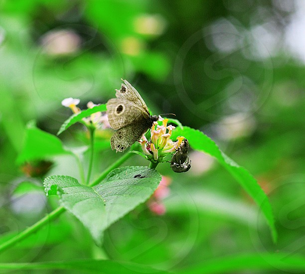 butterfly insect flower natural photo