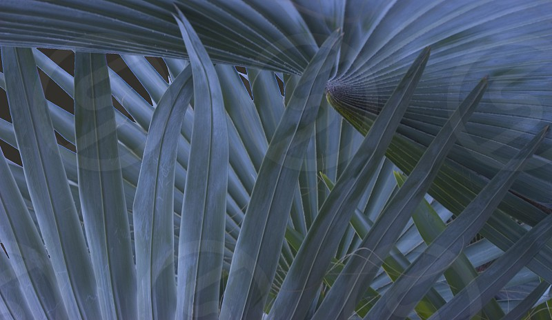 grey colored palm leaves photo