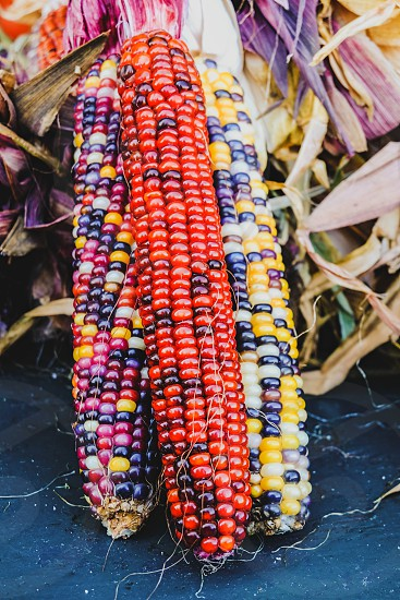 Multicolored Indian Corn at a fresh market photo