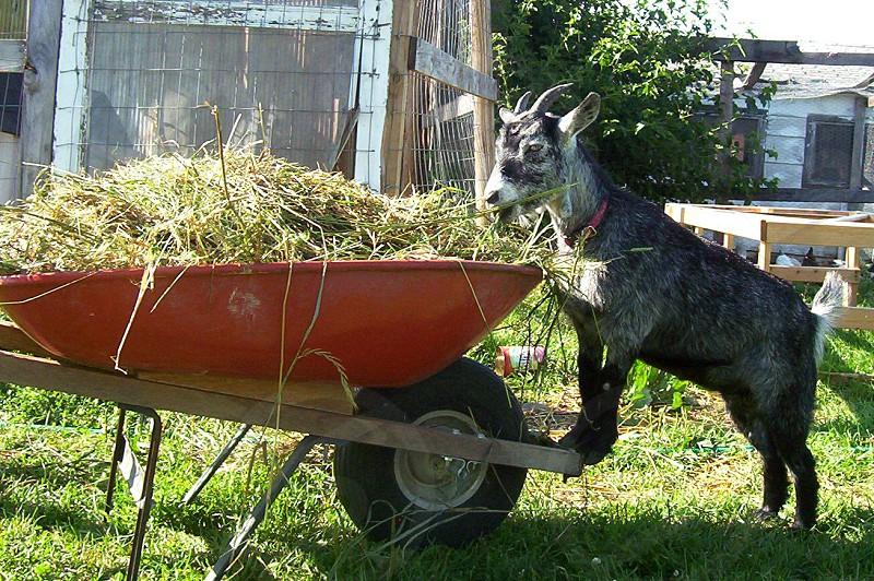 Farmer's Helper photo