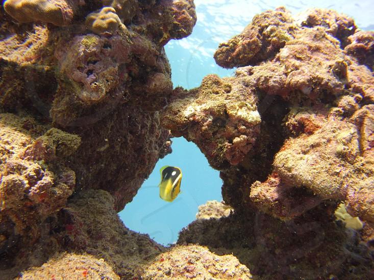 Underwater scuba diving fish water coral ocean  photo