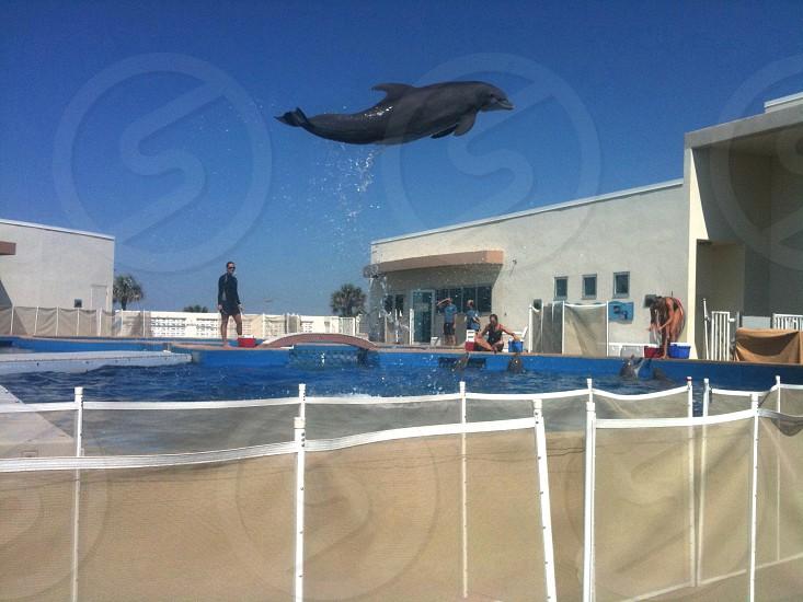 dolphin in flight photo