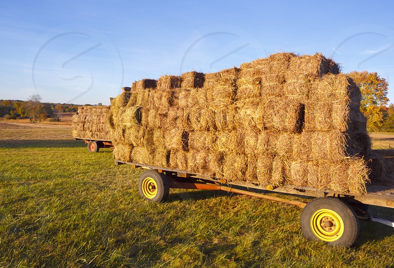 Country Living - Load of Hay photo