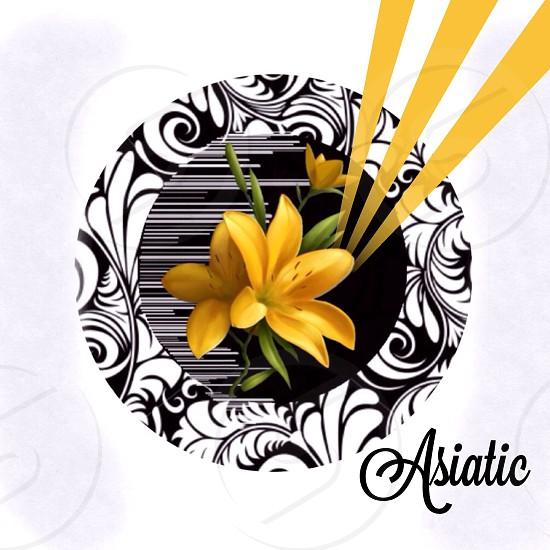photo of yellow petaled flower photo