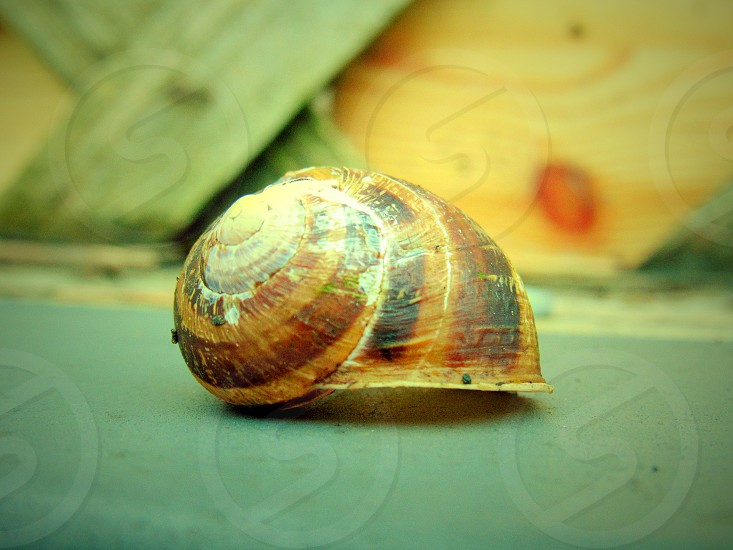 Snail Shell photo