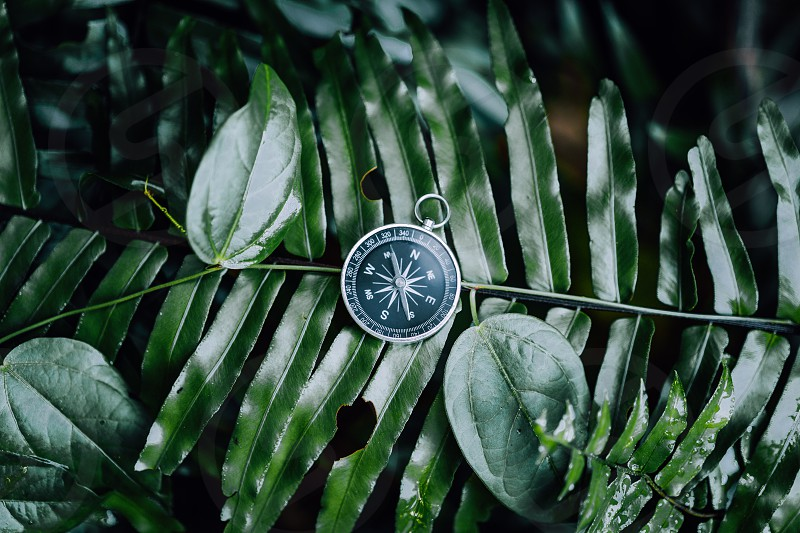 Compass among fern leaves in a tropical jungle. Adventure discovery navigation concept. photo