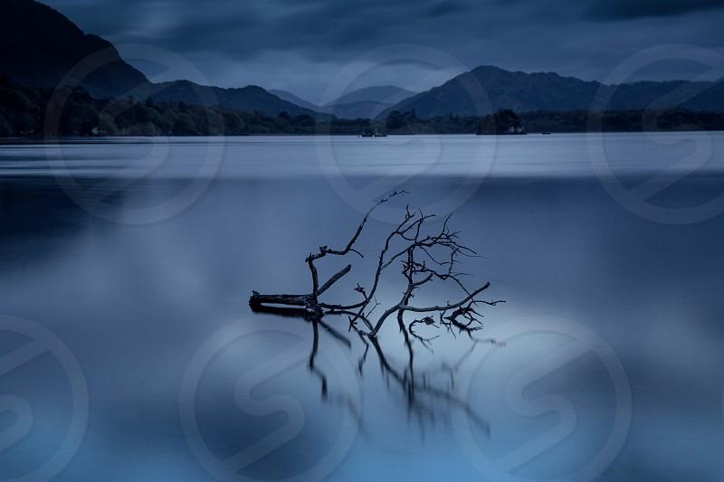 brown driftwood on serene glass lake under grey sky photo