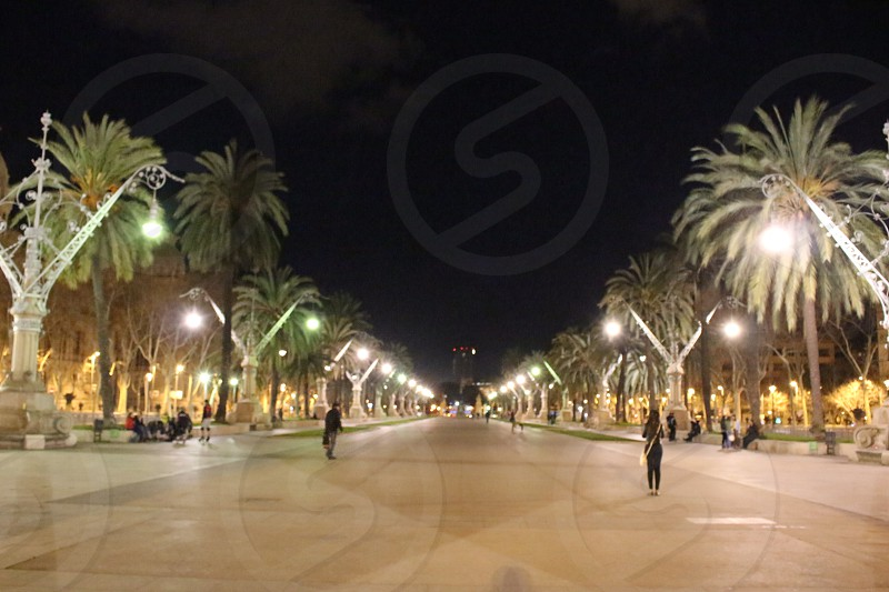 Lights nights fun Palmtrees street Barcelona photo