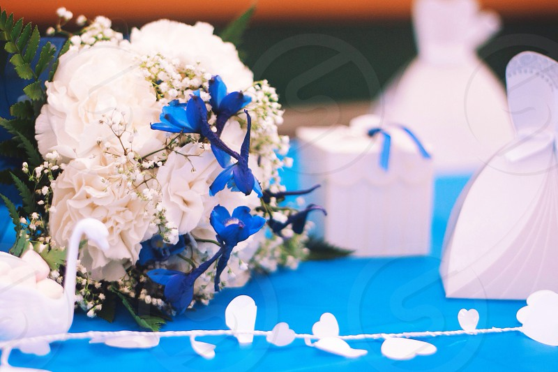 white and blue flowers photo