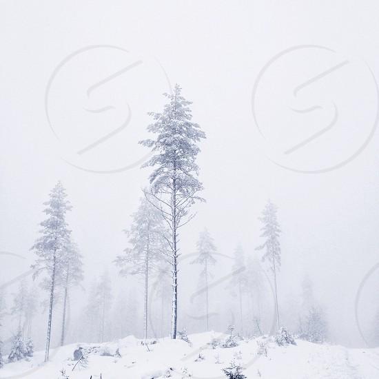 Winter white photo