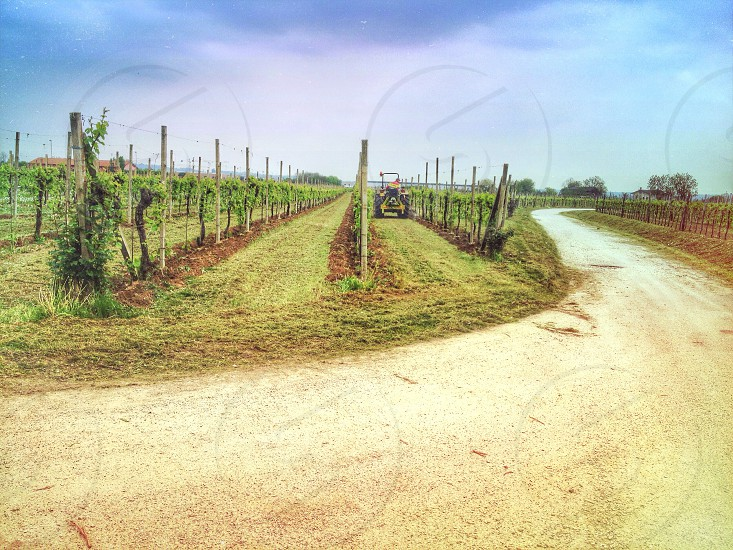 vineyard with a brown tractor photo