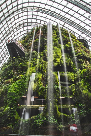 cloud forest gardens by the bay photo