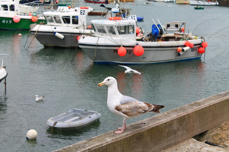 Fishing boats at Lyme Regis photo
