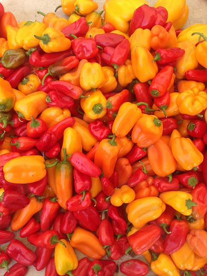 Boston Farmers market peppers photo