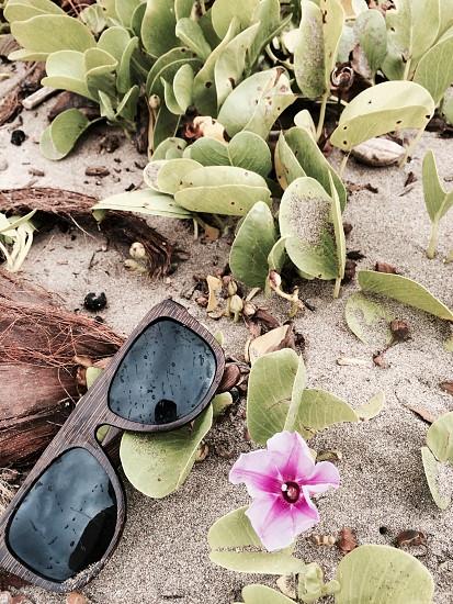 brown wood plastic frame sunglasses photo