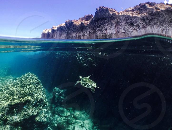 Exploring the ocean in beautiful Hawai'i photo