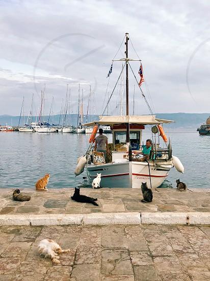 Cats waiting by fishermen Hydra Greece photo
