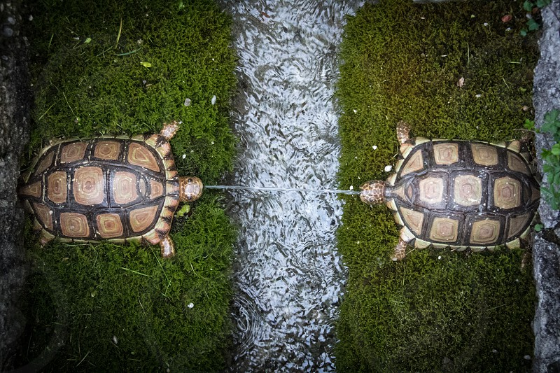 Two turtle sculptures in an outdoor garden with water feature. photo