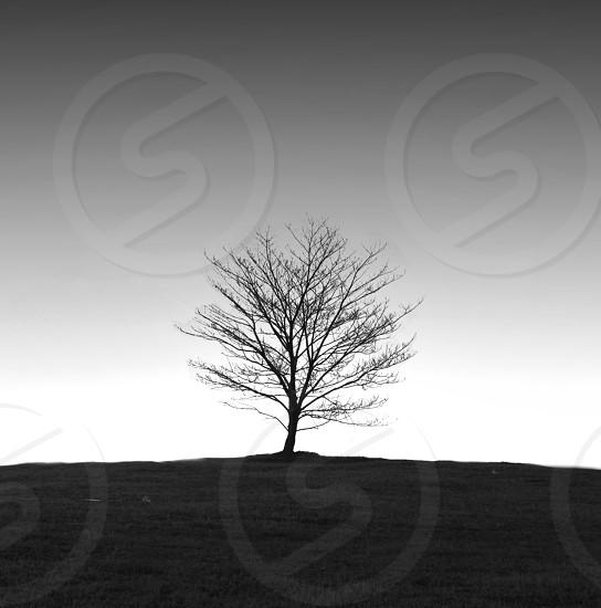 black silhouette of leafless tree photo