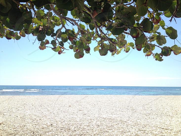 Dominican Beach photo