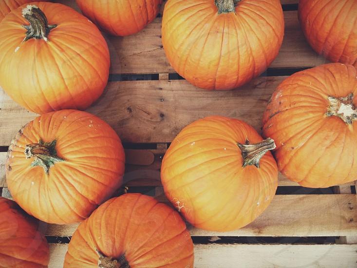 orange pumpkins on brown wooden table  photo