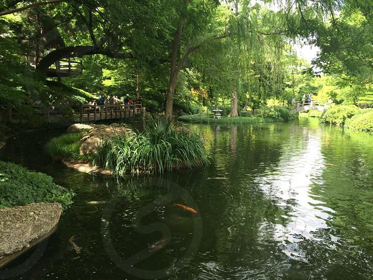 Japanese Garden Fort Worth Botanic Gardens photo