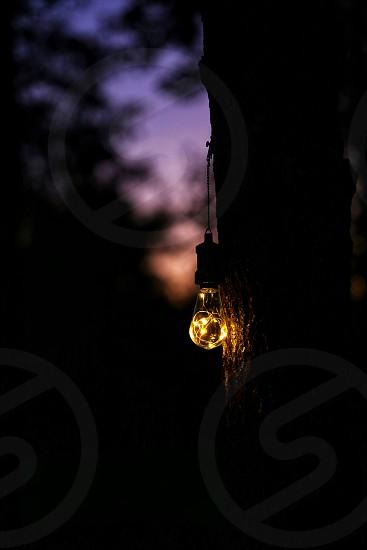 Illuminate forest tree light shine glow sunset ambiance  photo