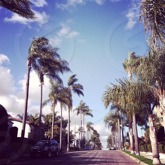 Wind blowing with tall palm trees in Southern California. Sunny wide street shot in Long Beach near Los Angeles.  photo