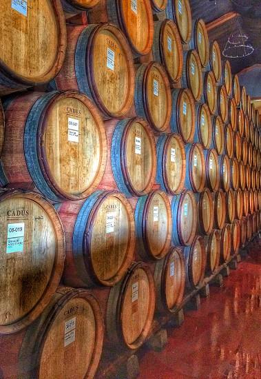 wine cellar full of brown wooden kegs photo