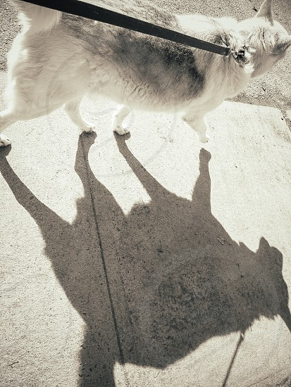Me and my shadow photo