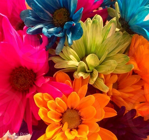 Some beautiful flowers showing off the colors of the rainbow  photo