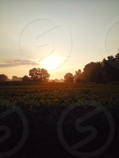 green grassy field in sunset view photo