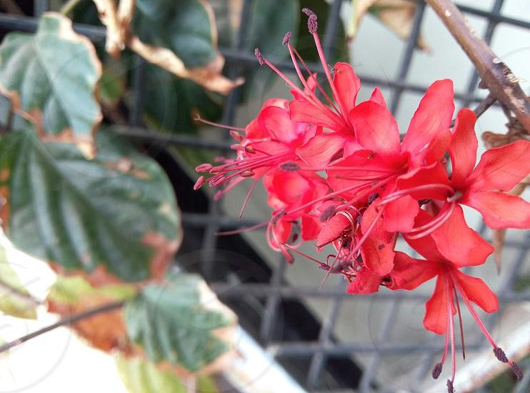 Flower go creative #spring photo
