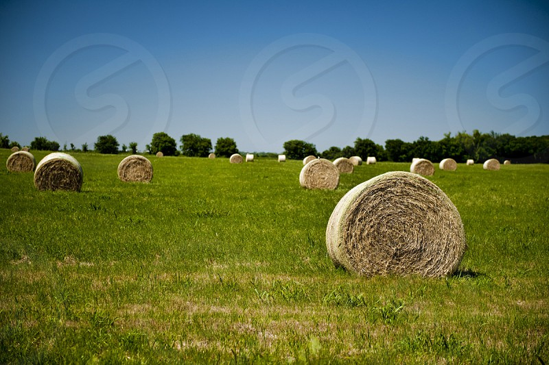 agricultural; agriculture; autumn; bale; blue; circle; corn; country; countryside; crop; cut; dry; farming; farmland; feed; field; gold; golden; grain; grass; grow; growing; harvest; harvested; hay; industry; land; landscape; meadow; natural; nature; outdoor; package; plant; prairie; roll; round; rural; russia; rye; scenic; sky; stack; straw; summer; sunset; urban; view; wheat; yellow photo
