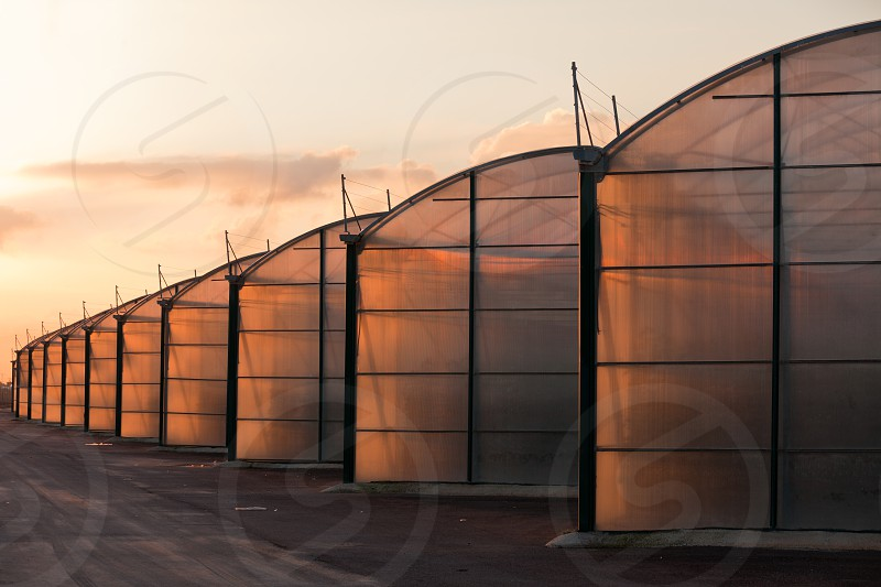 Large scale commercial greenhouse illuminated by orange glow of setting sun photo
