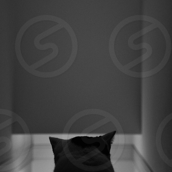 Black Cat in Front of White Door photo