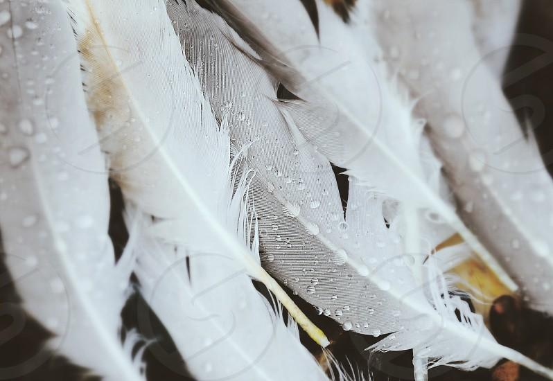 white feather photo