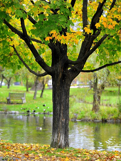 Autumn Colors in the park. photo